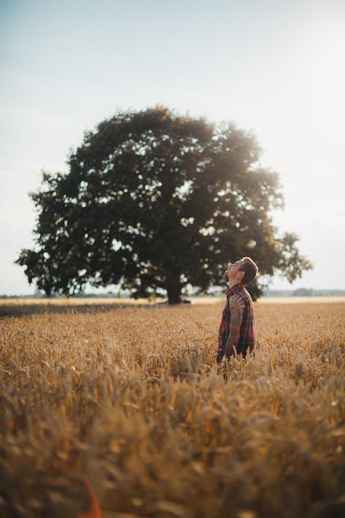 Ảnh lưu trữ miễn phí về ánh sáng ban ngày, cánh đồng, cây