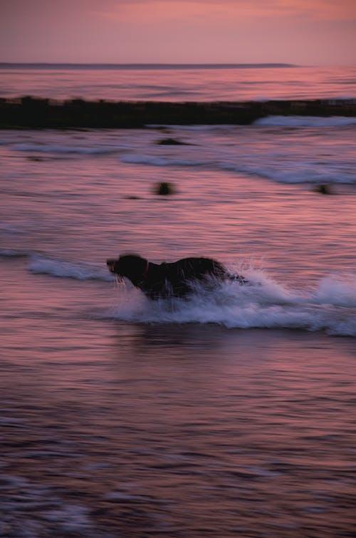 シースケープ, ビーチ, ぼやけての無料の写真素材