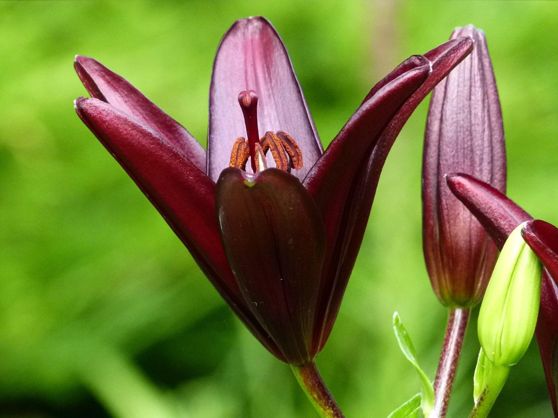 Red 6 Petaled Flower