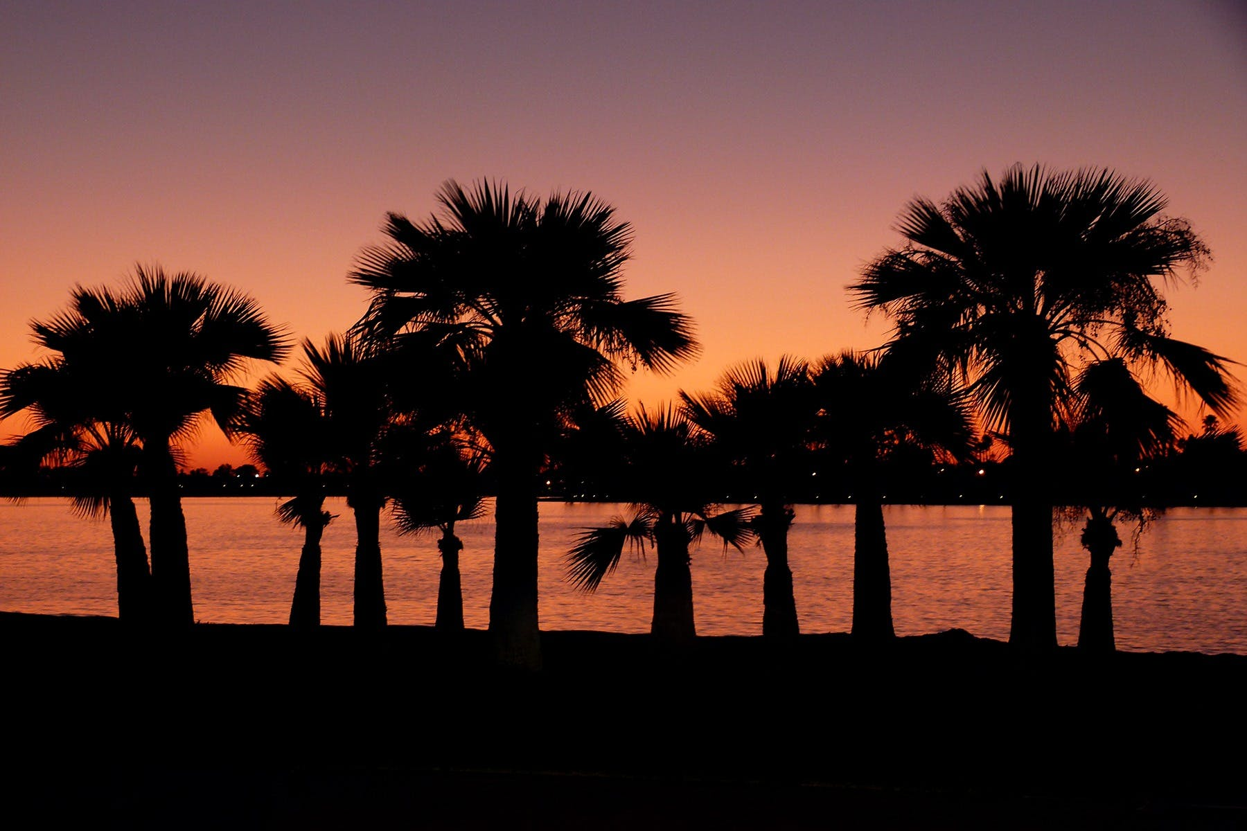 Free stock photo of sunset, weather, coast, palms