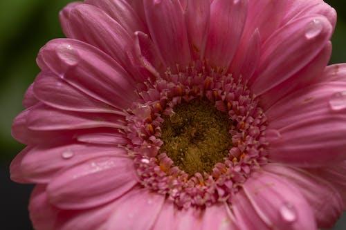 Foto d'estoc gratuïta de amor, capturar fotografia de la natura, concentrar-se
