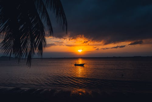 Silhouette of Palm Tree on Beach during Sunset