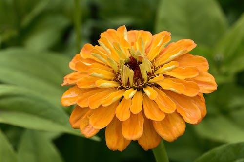 Blooming Orange Flower