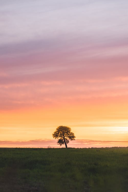 Green Tree on Green Grass Field during Sunset