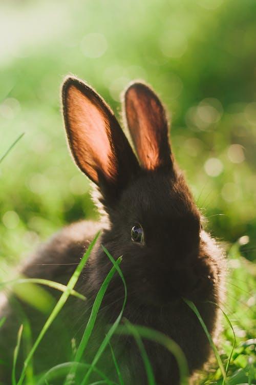 Základová fotografie zdarma na téma bokeh, fotografování zvířat, kožešina