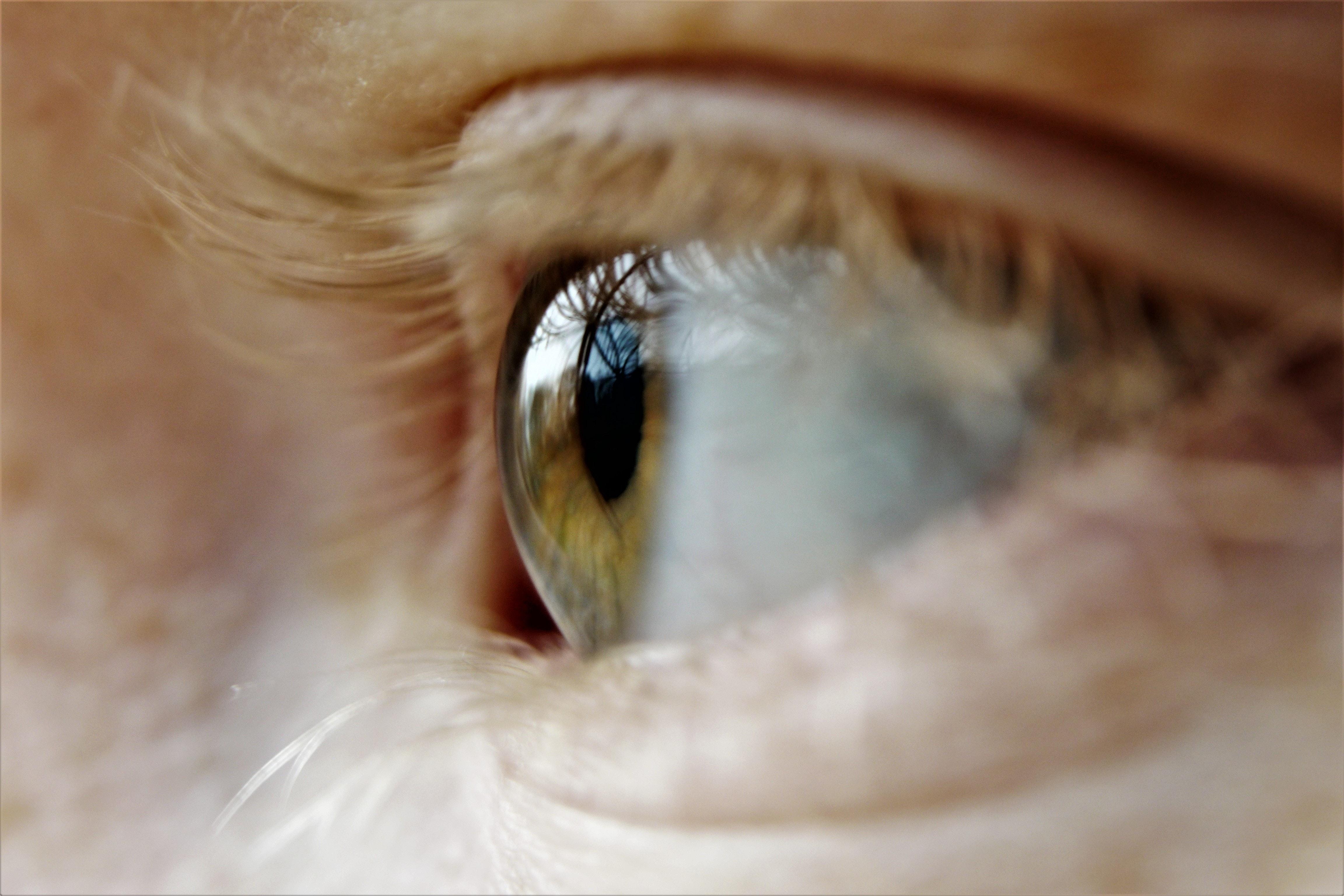 目を見開く人の心理12個|男性の「好き視線」5つ