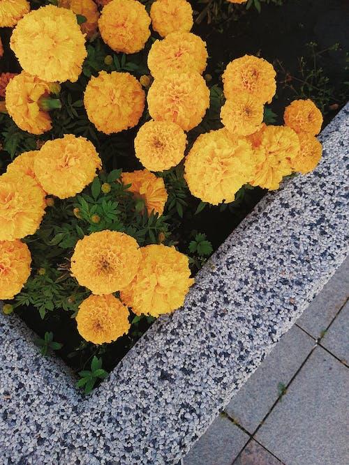 Gratis stockfoto met bloeiend, bloemachtig, bloemblaadjes