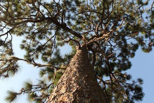 Free stock photo of beauty of nature, blue sky, bole