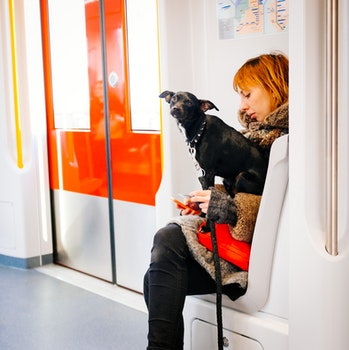 Free stock photo of dog, metro