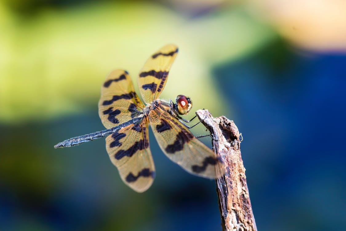 beest, close-up, daglicht