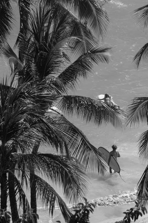 Silhouette of Man Standing on Palm Tree