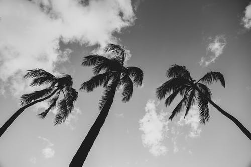Grayscale Photo of Palm Tree Under Cloudy Sky