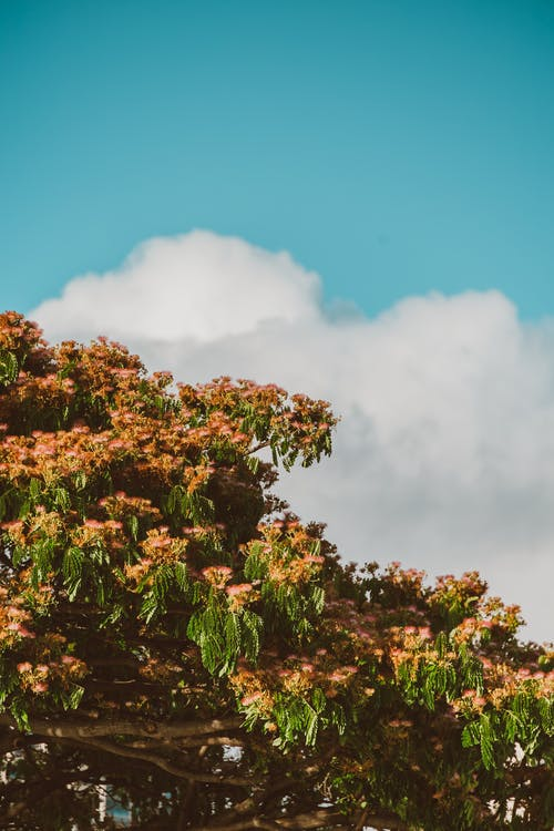 Green and Brown Trees Under Blue Sky