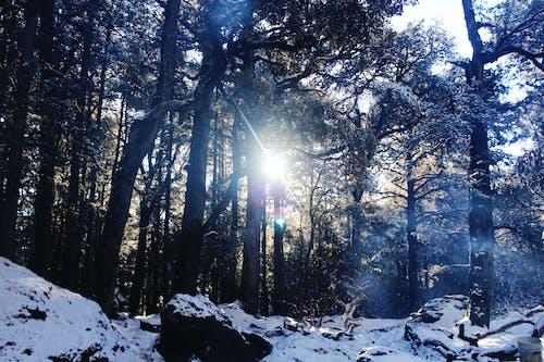 Foto d'estoc gratuïta de a l'aire lliure, acampant, arbres, aventura