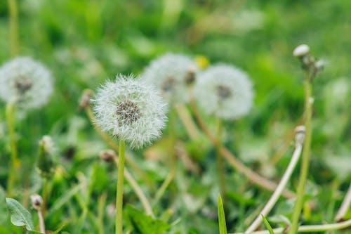 Photos gratuites de centrales, croissance, fleurir, fleurs