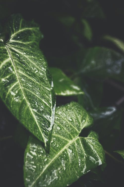 Foto profissional grátis de ecológico, gotas, gotículas, gotinhas