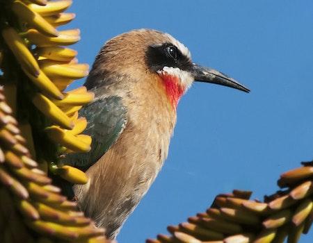 Free stock photo of bird, safari, wildlife, wild bird