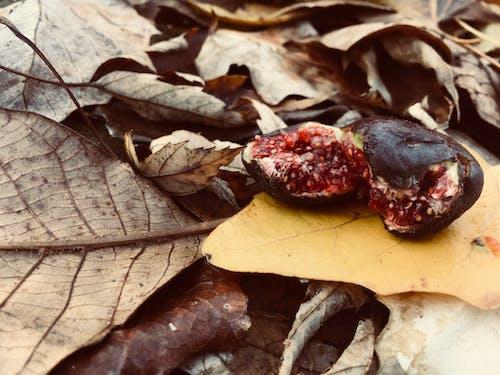 doğa, güz yaprakları içeren Ücretsiz stok fotoğraf