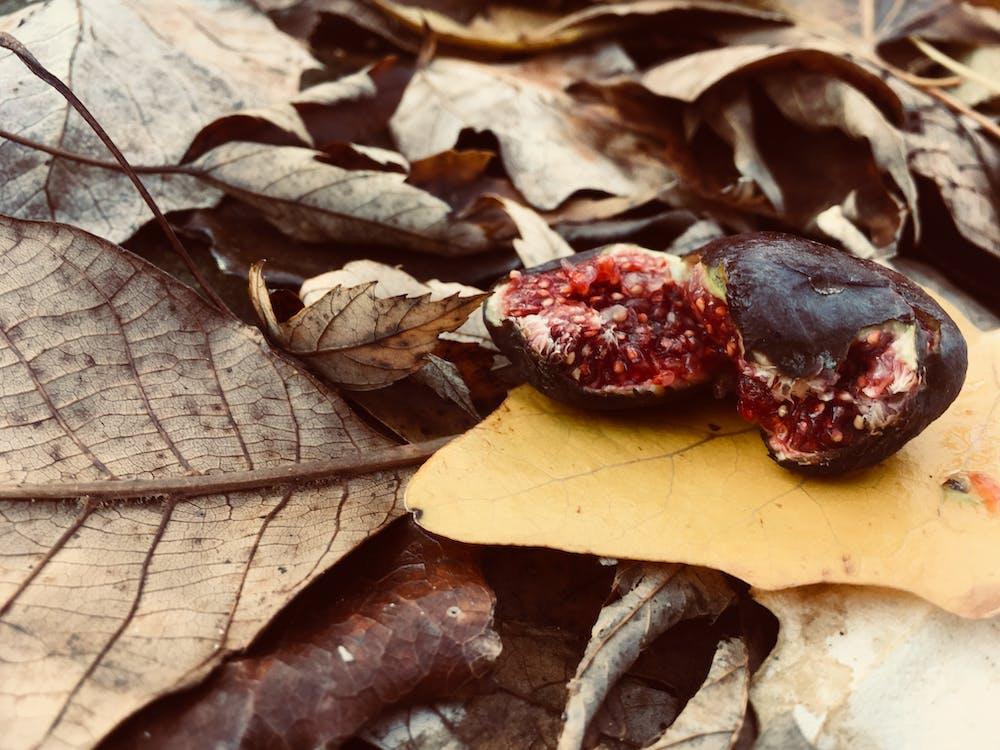 doğa, güz yaprakları, kuru yapraklar