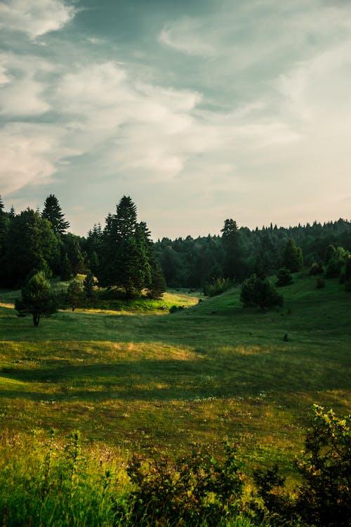Foto stok gratis bidang, cahaya, daun