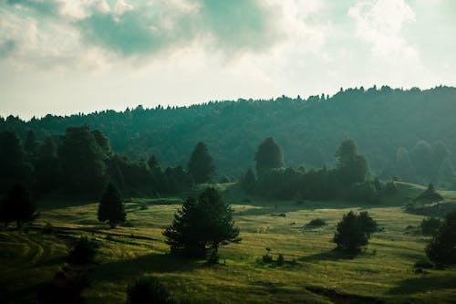 Foto stok gratis bukit, cemara, di luar rumah
