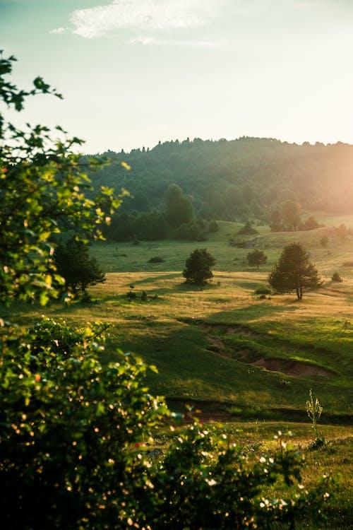 Foto stok gratis agrikultura, bukit, daun