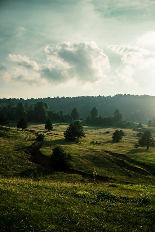 Foto stok gratis agrikultura, bidang, bukit