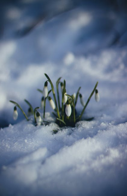 White Petaled Flower on Snow Surface