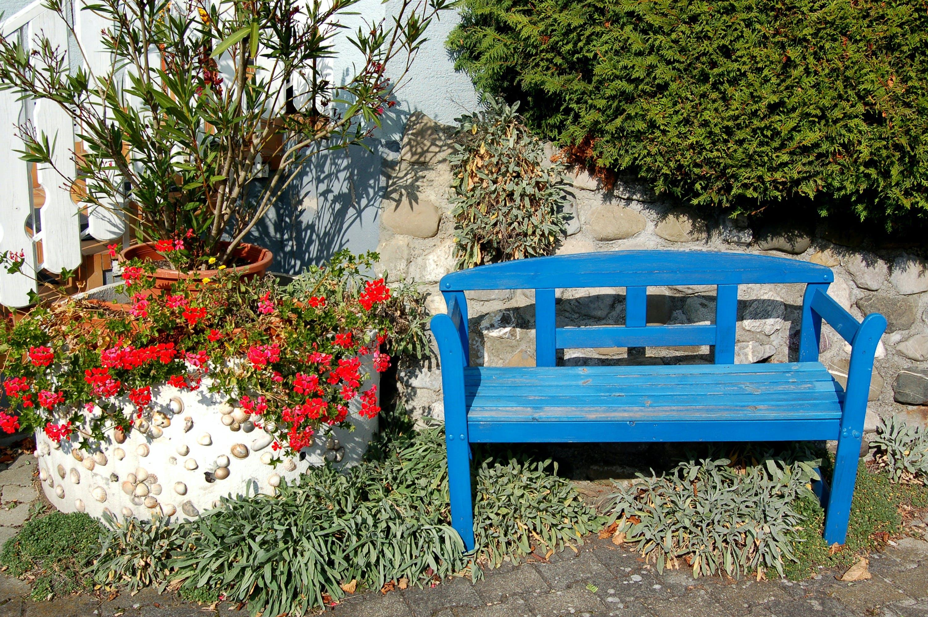 bench, blue color, flowering plant