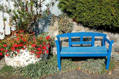 Kostenloses Stock Foto zu badeort, bank, blaue farbe, blühende pflanze
