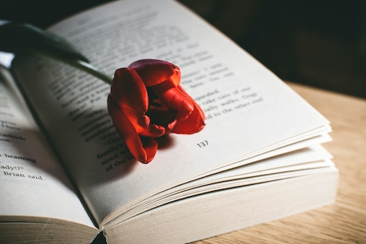 Red Tulip Flower On Book Page