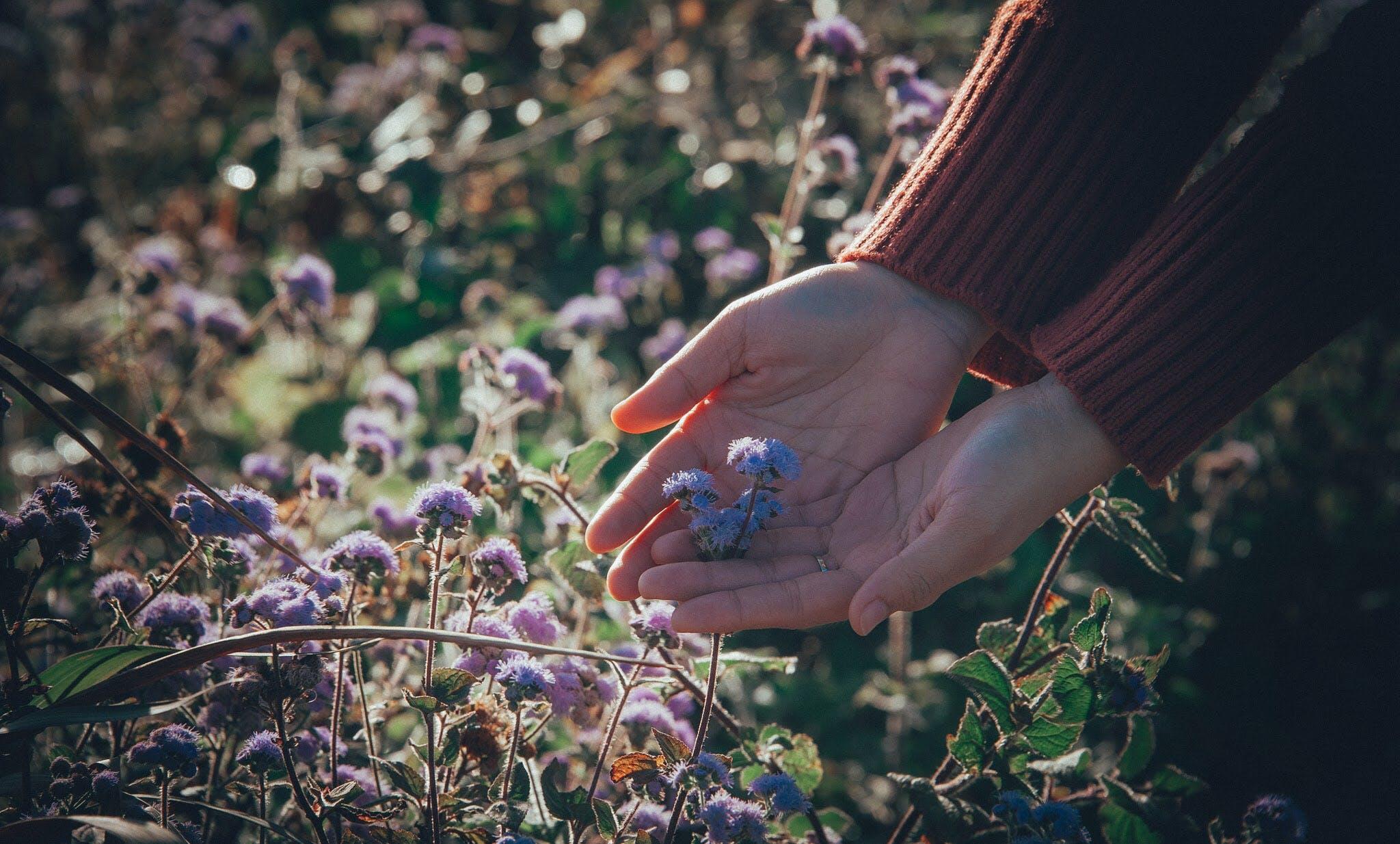 Бесплатное стоковое фото с завод, руки, флора, цвести
