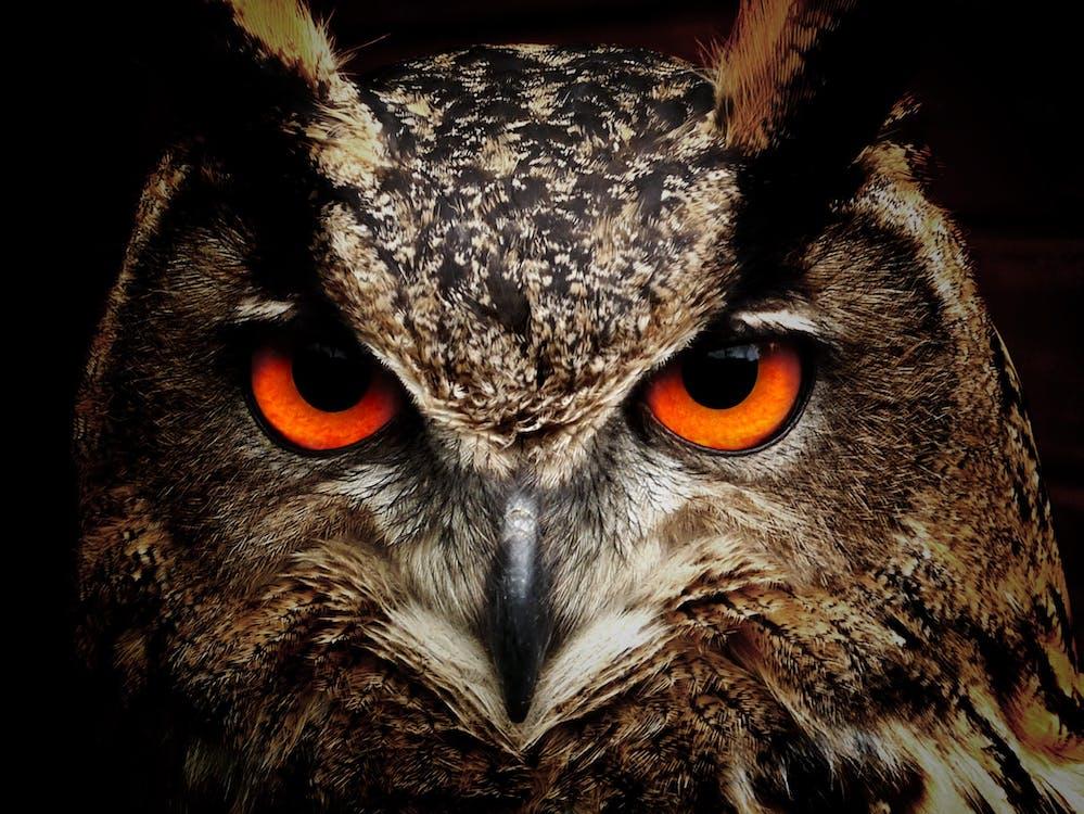 눈, 동물, 동물 사진