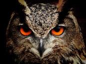 bird, animal, eyes