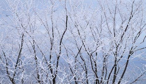 Frozen Trees At Winter Season