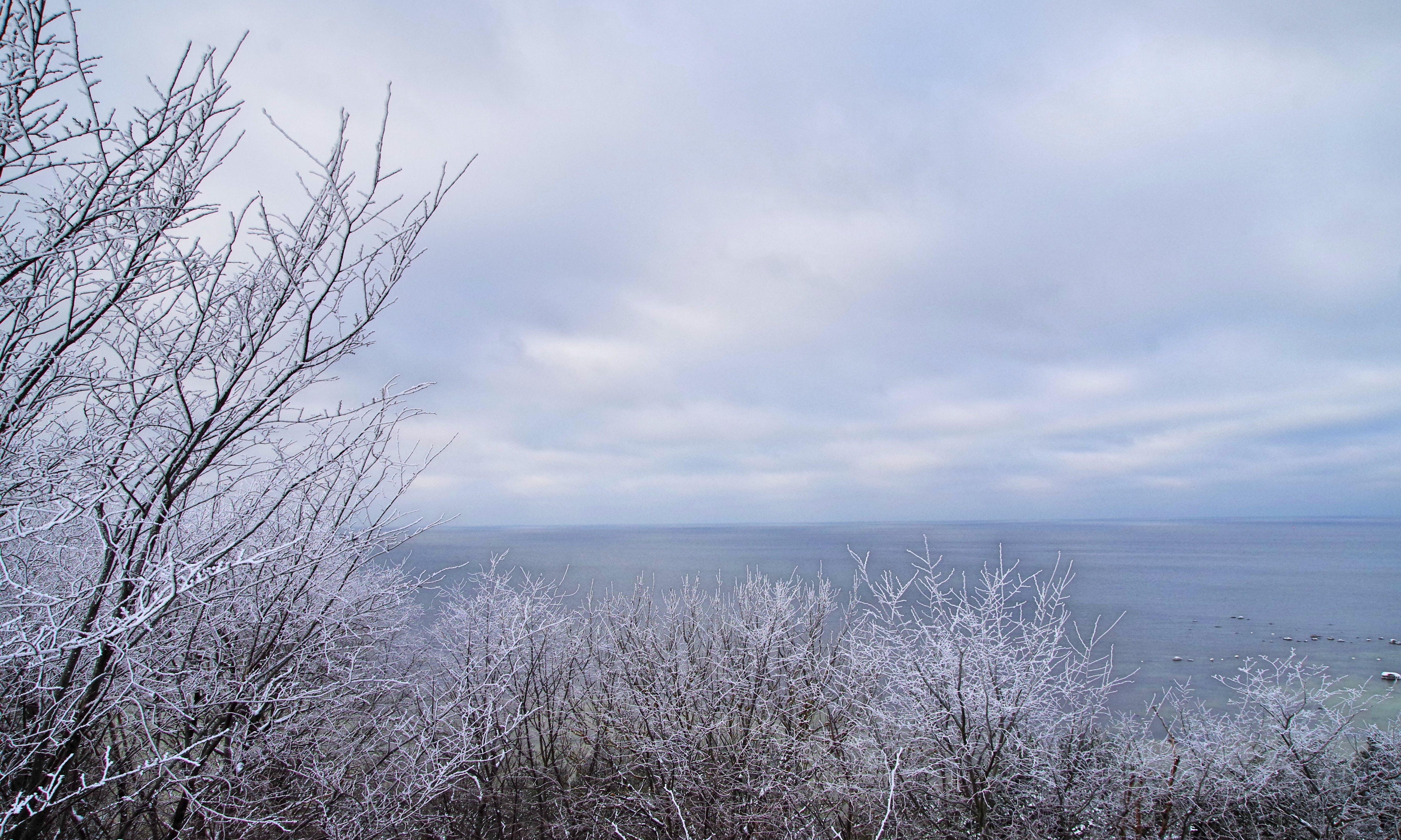 Imagine de stoc gratuită din anotimp, arbori, cer, frig