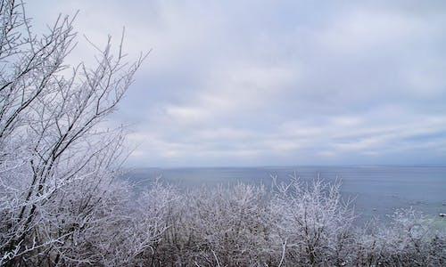 Kostenloses Stock Foto zu bäume, himmel, jahreszeit, kalt