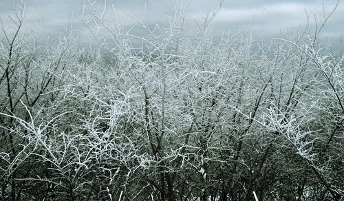 Fotos de stock gratuitas de arboles, frío, invierno, nevar
