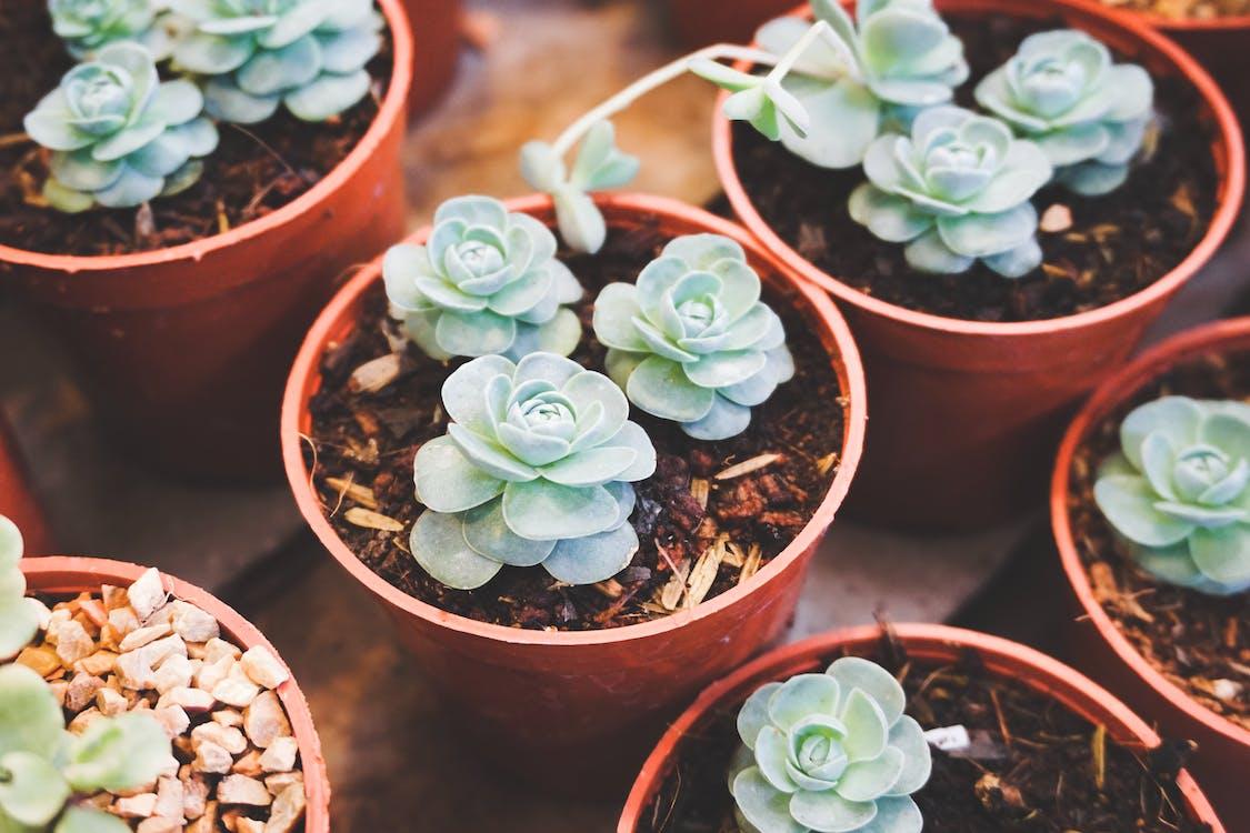 cactus, cassoles, colors