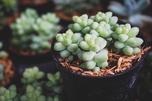 Gratis stockfoto met bloem, bloempot, cactus, cactusplant