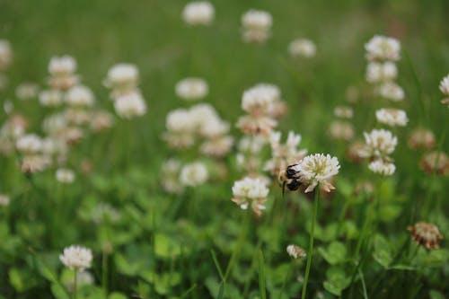 Gratis lagerfoto af bi, fordør, græs, græsplæne