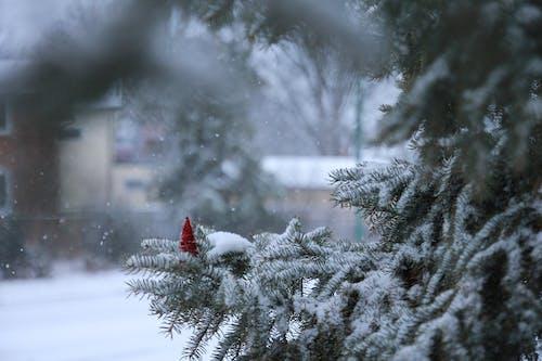 Gratis lagerfoto af by, fyrretræ, jul, mørkegrøn