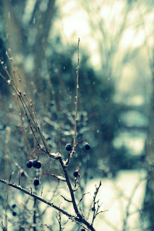 Gratis lagerfoto af fokus, forkølelse, sne, snestorm