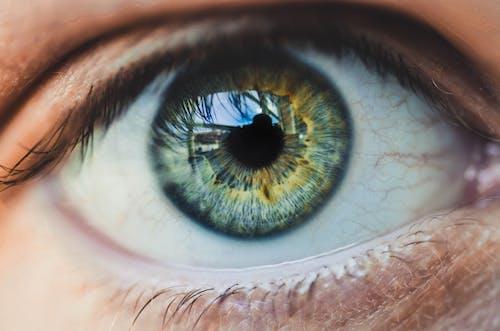 Fotos de stock gratuitas de bonito, ojo, ojos grandes, ojos verdes