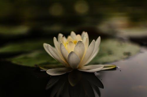 Darmowe zdjęcie z galerii z biały kwiat, delikatny, flora