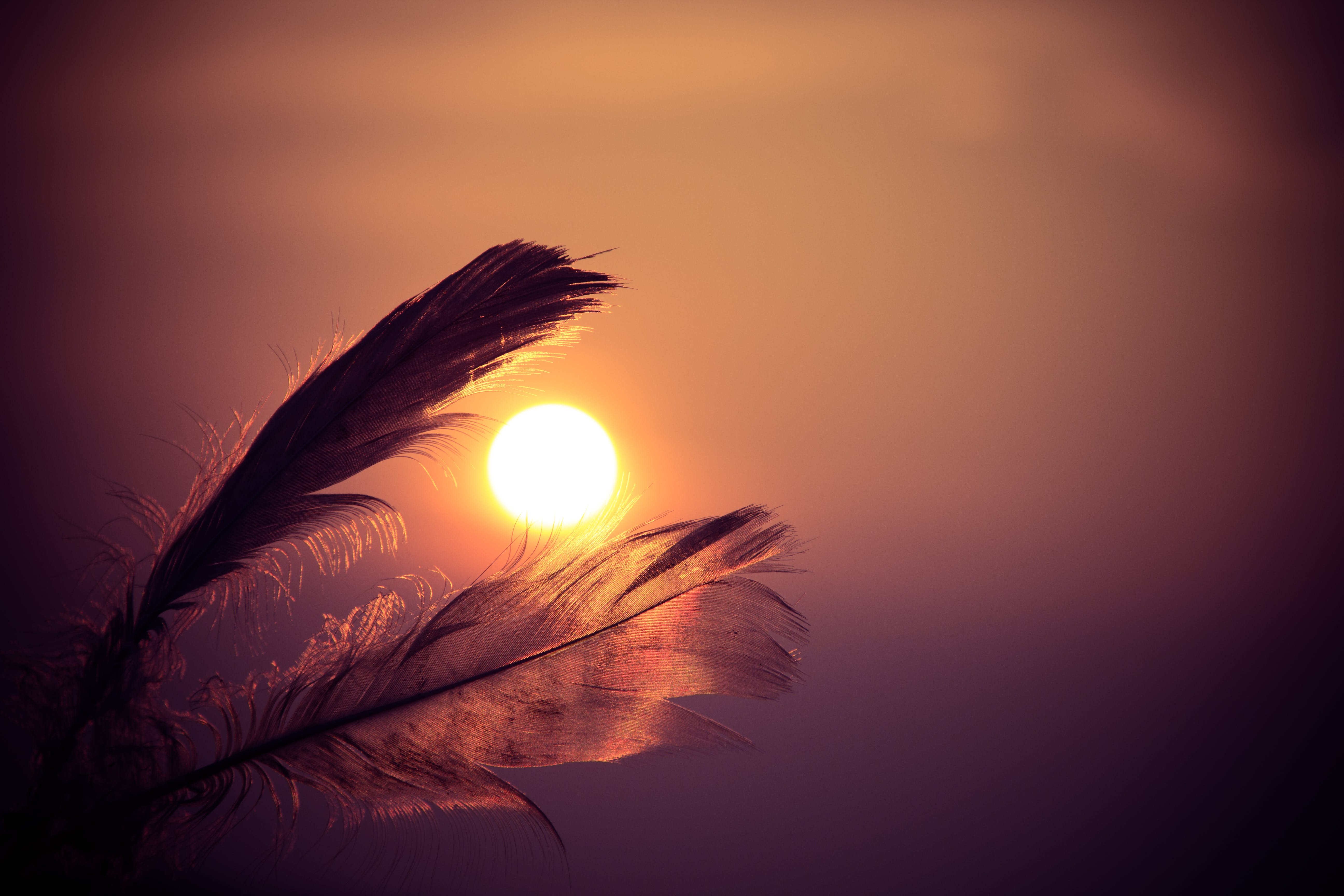 Free stock photo of sky, sunset, sun, feathers
