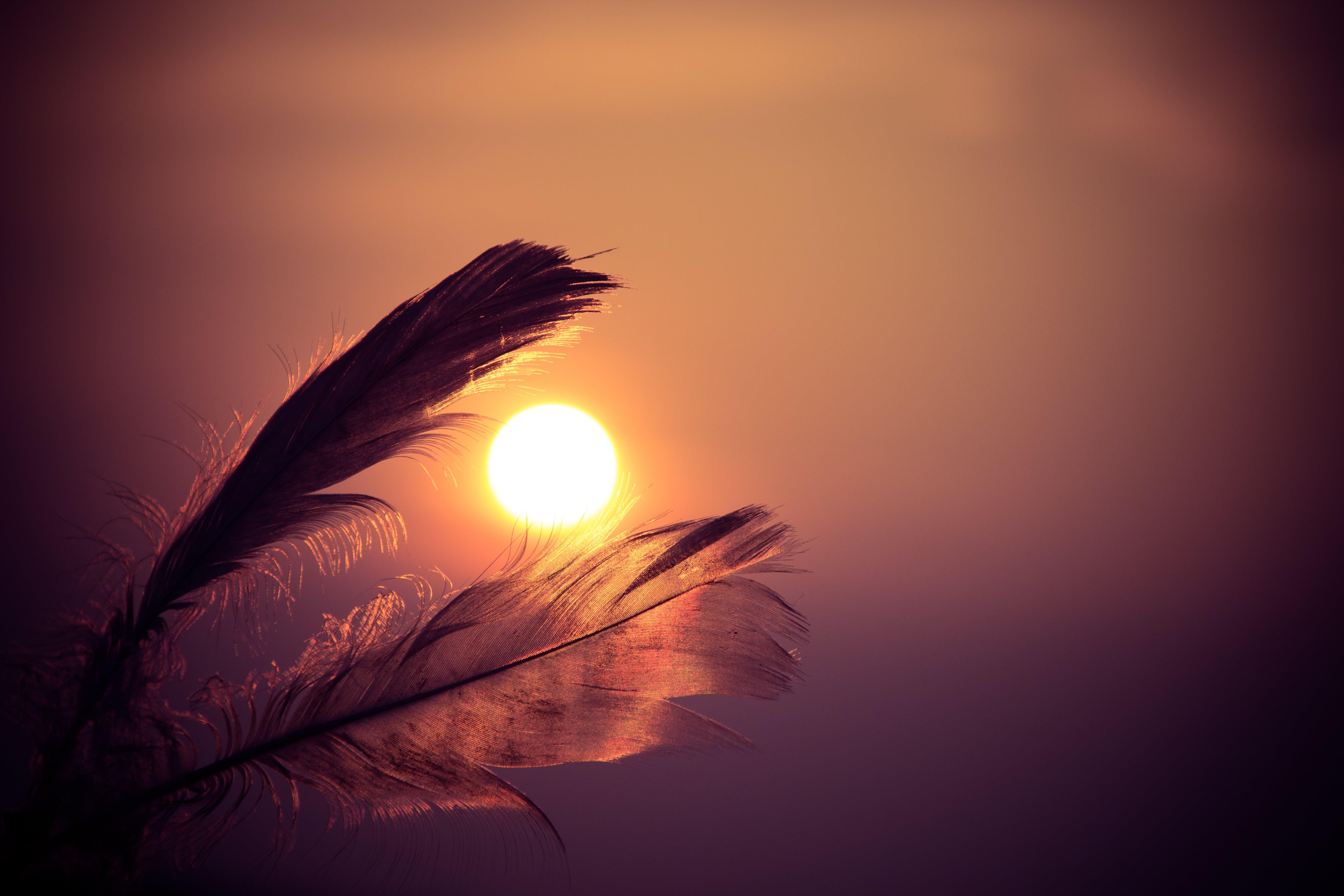 feathers, sky, sun