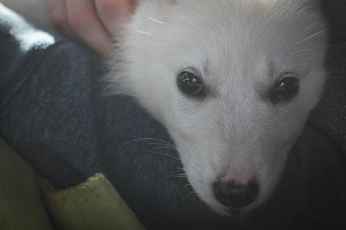 Kostenloses Stock Foto zu baby, bezaubernd, hund, lächeln
