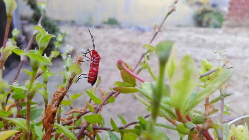 Free stock photo of after rain, insect photography, peaceful insect