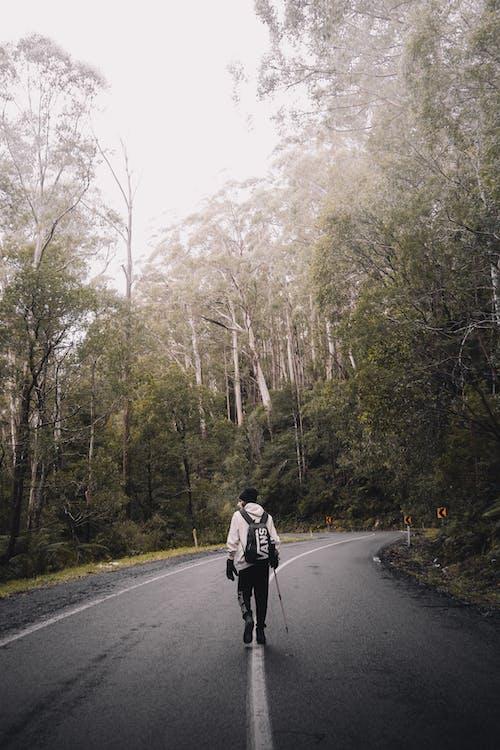 @戶外, 亞拉山脈, 亞拉河谷 的 免費圖庫相片